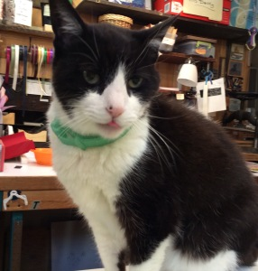 photo of Molly the bindery cat