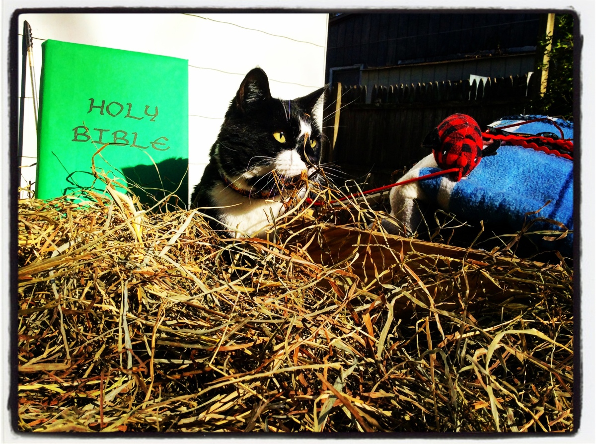 The Nativity Story from a Cat's Viewpoint